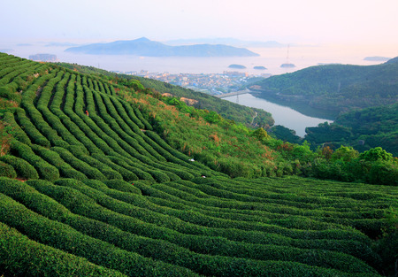 two people only: Tea plantation Stock Photo
