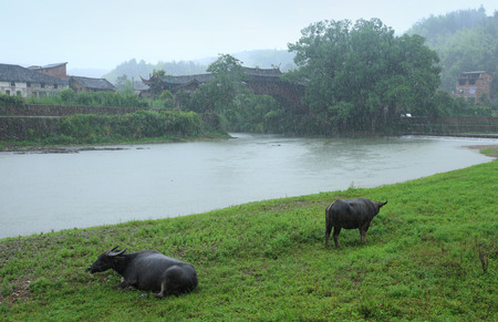 radon: Buffaloes by the lake Stock Photo