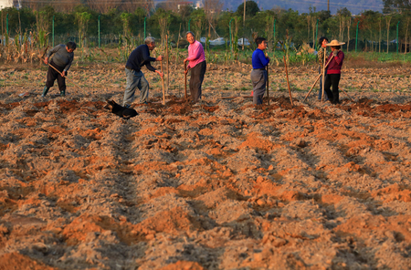 ploughing: Farmers ploughing the land