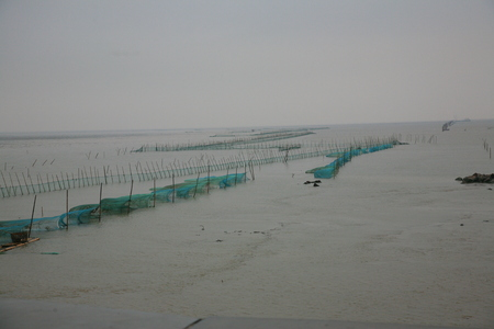 fishing nets: Coastal tidal flats with fishing nets in Hangzhou bay wetland