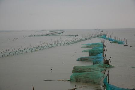 redes de pesca: Planicies de marea costeras con redes de pesca en la bah�a de Hangzhou humedal Foto de archivo