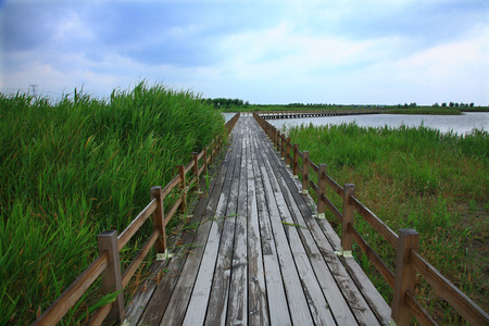 wooden railings: Wooden pathway with railings through the Hangzhou bay wetland