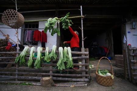 bok choy: Woman hanging bok choy