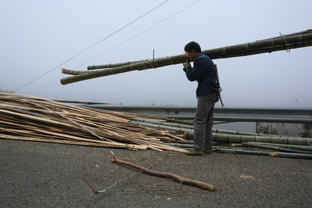 carrying: A man carrying bamboo poles