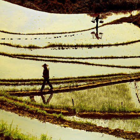 terraced field: Farmers working in the terraced rice field