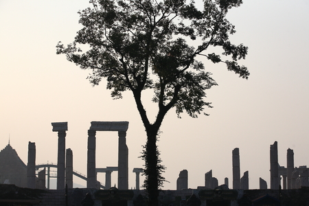 greek temple: View of a tree and replicas of ancient Greek temple in the background