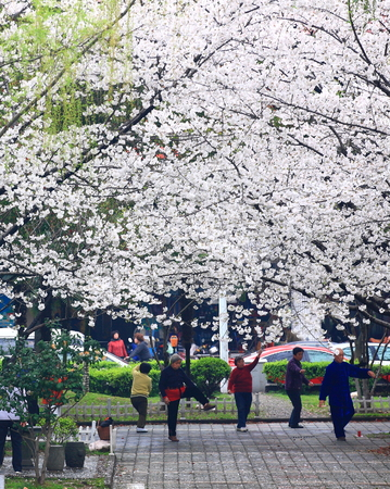 citizens: Senior citizens practicing tai chi in park Editorial