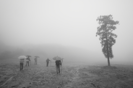 medium group of people: People hiking in misty area