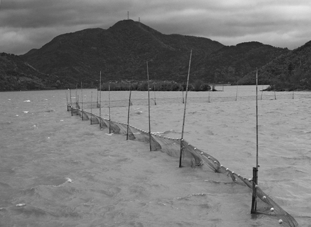 fixed: Fixed gillnet on stakes in water