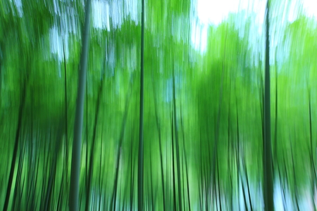 stretched: Stretched image of trees