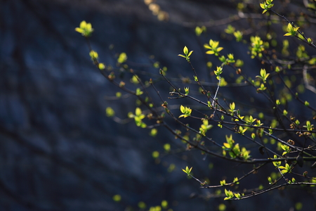 budding: View of budding plants in nature