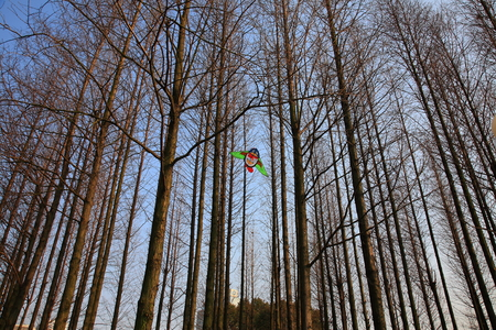 barren: View of a kite stuck on trees
