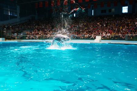 porpoise: Porpoise performances