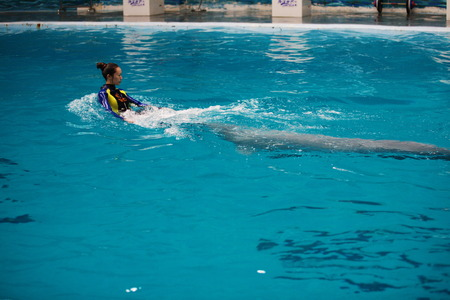 porpoise: Trainer and porpoise in a pool