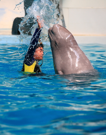 porpoise: Instructor and porpoise in a pool Editorial