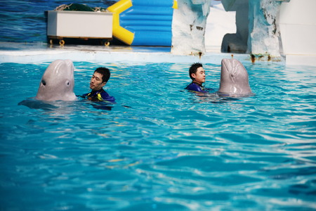 blowhole: Trainers and porpoises in a pool