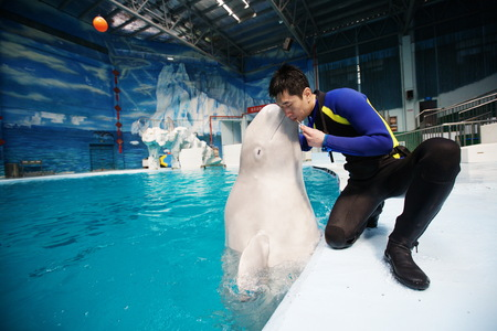 porpoise: Porpoise kissing its trainer at a pool