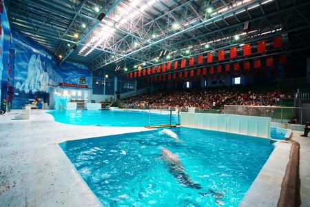 dolphinarium: Porpoises swimming in the pool at a dolphinarium Editorial