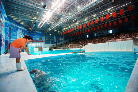 porpoise: Zookeeper interacting with a porpoise in the pool Editorial