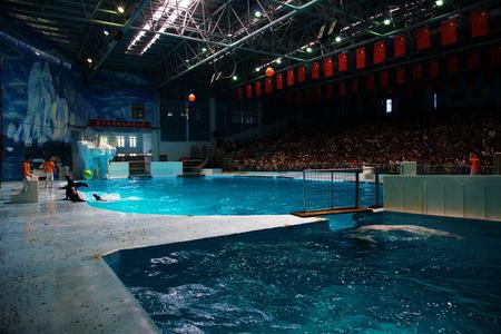 sea lion: Sea lion performances Editorial