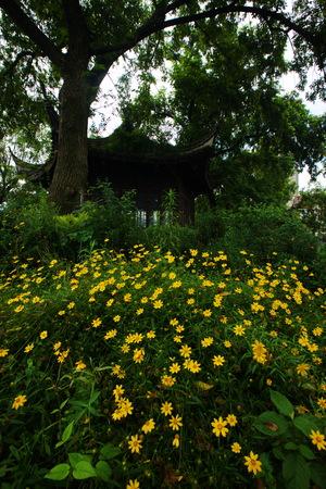 gazebo: View of flowering plants under a gazebo