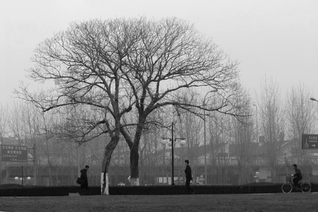 only three people: Locust trees in the park Editorial
