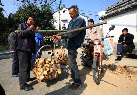 45 49 years: Farmers are weighing bamboo shoots
