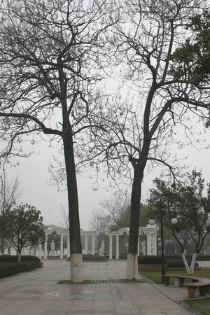 langosta: acacias en el parque