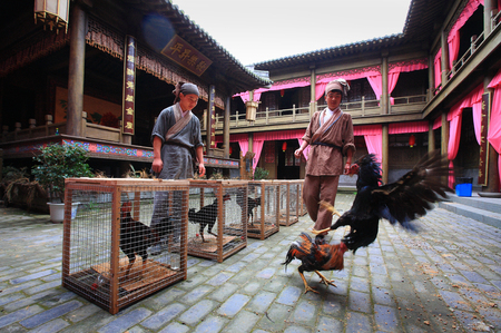 chinese courtyard: Cockfighting in a traditional Chinese courtyard