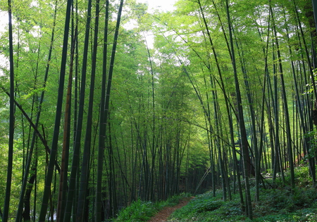 thicket: Thicket in nature