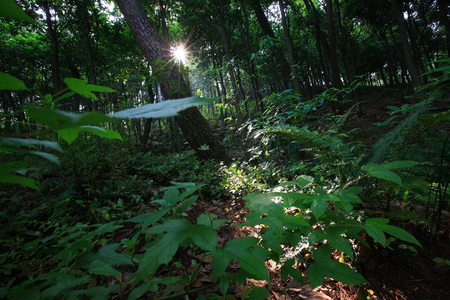 the thicket: Thicket in nature