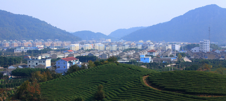 local landmark: Tea plantation in the rural area of Yinzhou Stock Photo