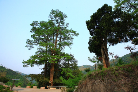 mao: Scenic view of the Mao Huo Village with famous old trees