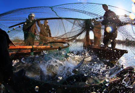four person only: Fishermen catching a net of fish