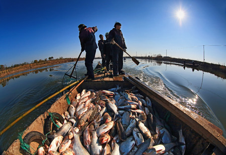 navigating: Fishermen navigating their boat back to shore