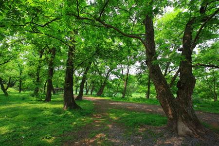 pathways: Pathways through the forest