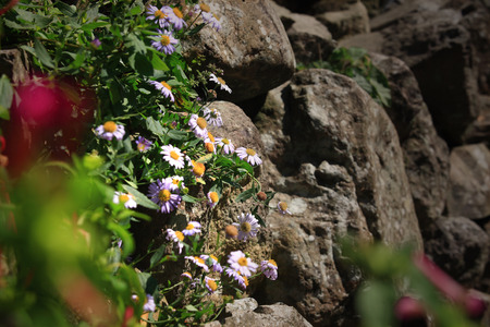 rockery: Flowers by a rockery Stock Photo