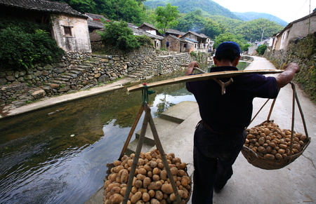 potato tree: Man carrying baskets of potatoes