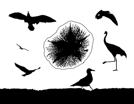 Silhouette of multiform sea birds and medusa.