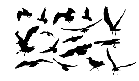 webbed: Set of multiform flying seagulls.