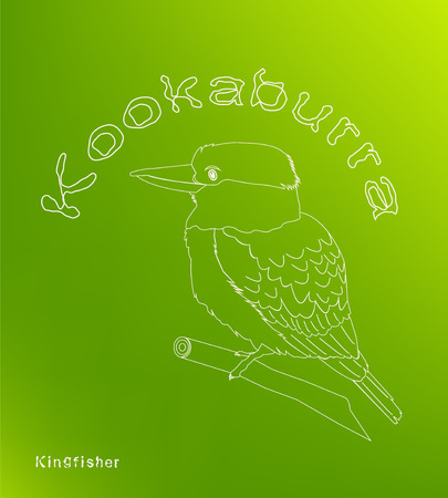 Laughing bird. Australian kookaburra. Green background.