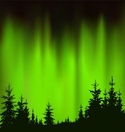 Silhouette of coniferous trees on the background of green sky. Evening. Northern lights.