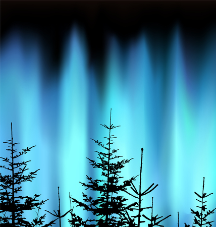 Silhouette of coniferous trees on the background of blue sky. Evening. Northern lights.  Neon presentation.