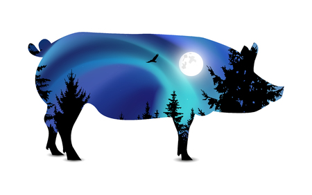 conifer: Silhouette of boar with blue northern lights and moonlight  in sky. Coniferous trees.