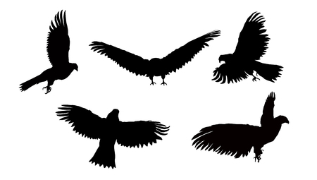 Set. Silhouettes of flying eagle.
