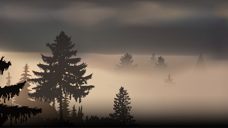 Panorama of mountains and pine forest. Lights of sunset. Thick fog.