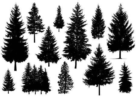 Set. Silhouette of pine trees. Illustration
