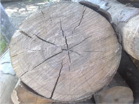 Beeld opsporen foto van logs met schors en splitsingen.