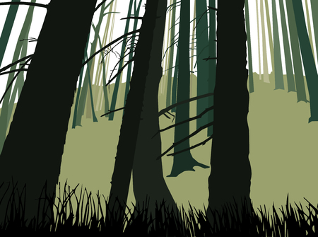 ridge: Image landscape. Eco banner. Trunks of coniferous  trees. Green and grey tones. Stock Photo