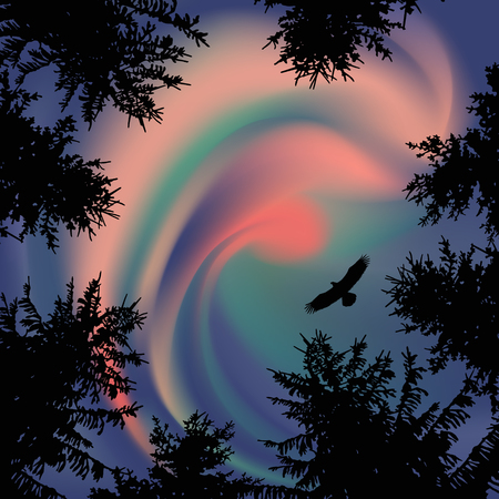 animal silhouette: Silhouette of coniferous trees on the background of colorful sky. Aurora. Sunset. Flying eagle. View from below. Stock Photo